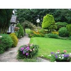 Chuyên dịch vụ chăm sóc bảo dưỡng sân vườn